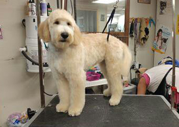 Doggie Stylz Pet Grooming dog before grooming